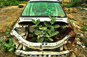car_300